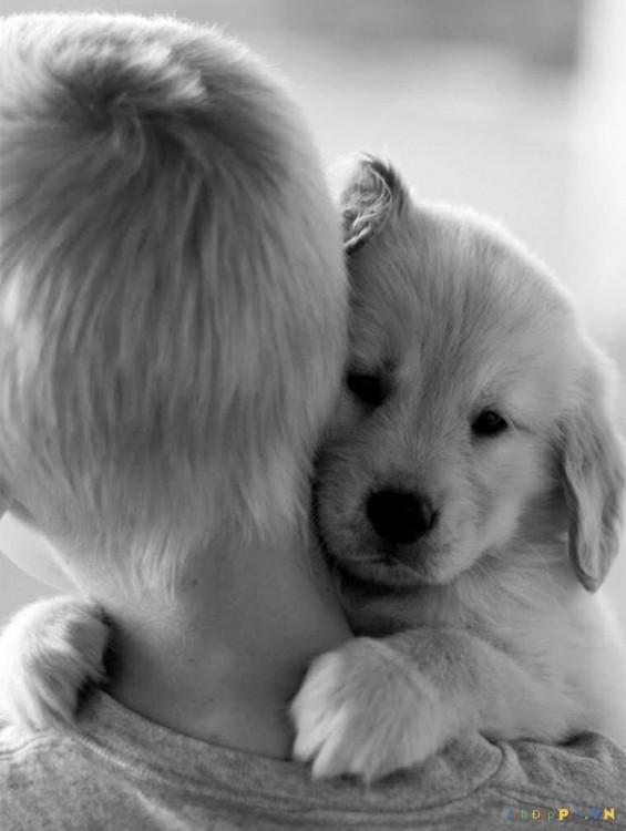 cachorro con nene