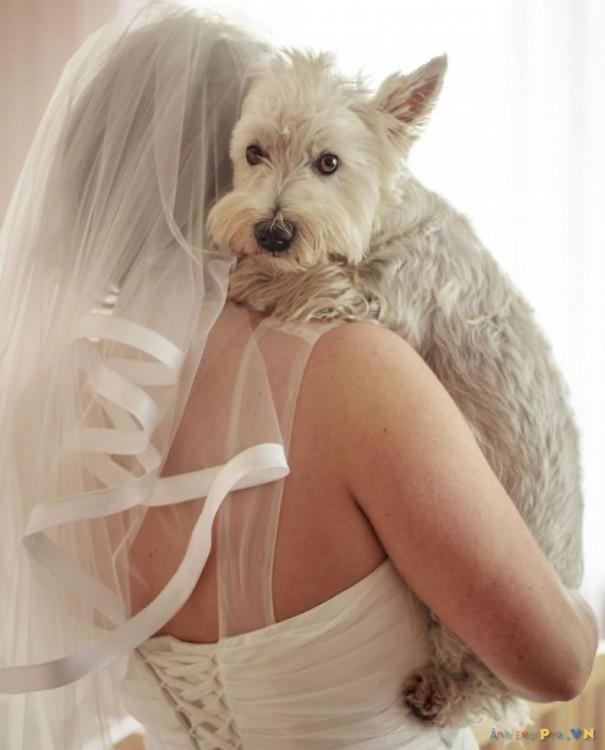 perro abrazando a esposa