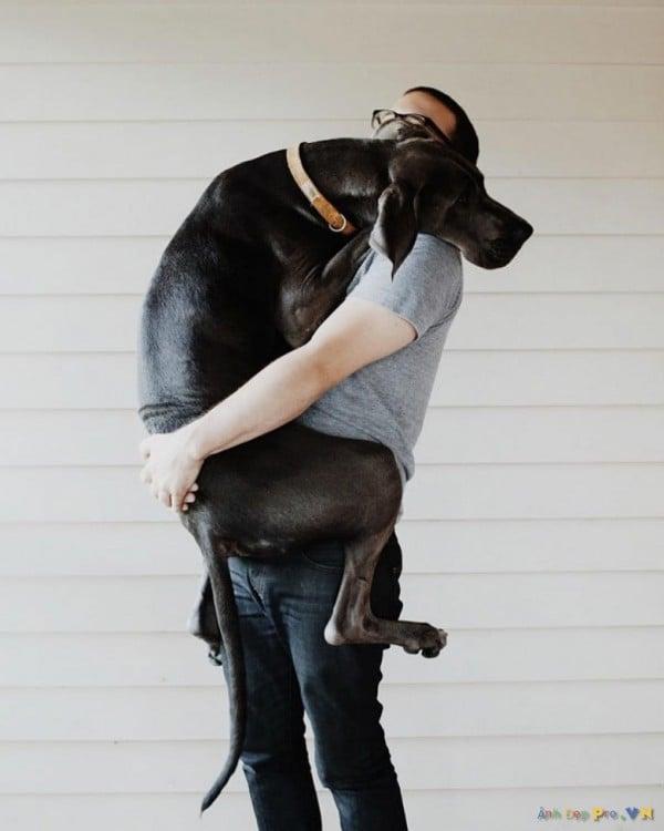 hombre abrazando a su gran danes