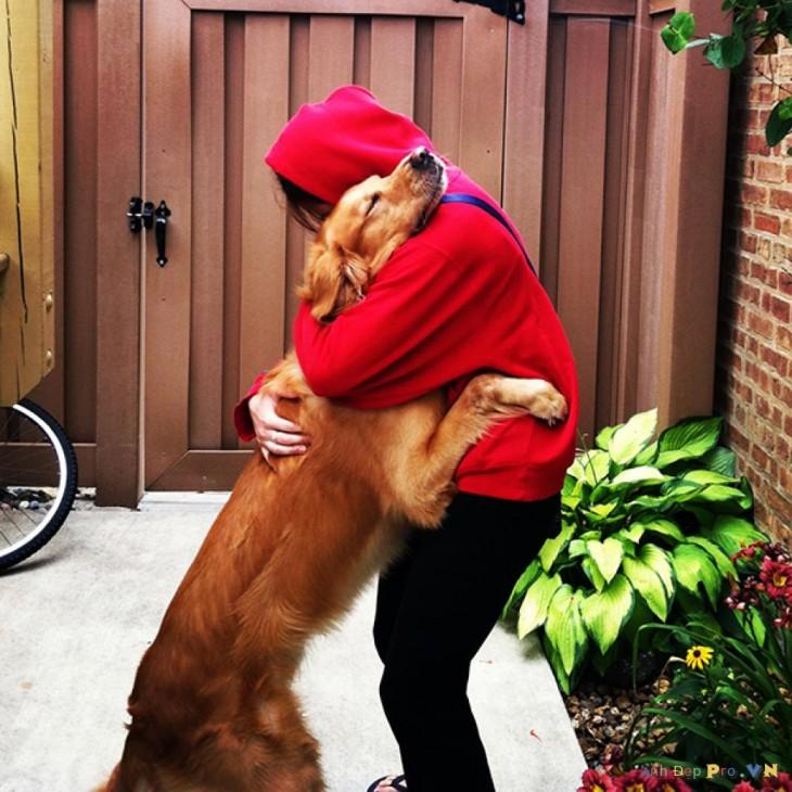perro dando al bienvenida a su amigo