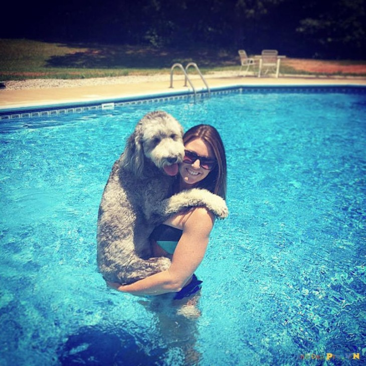perro y mujer en la piscina