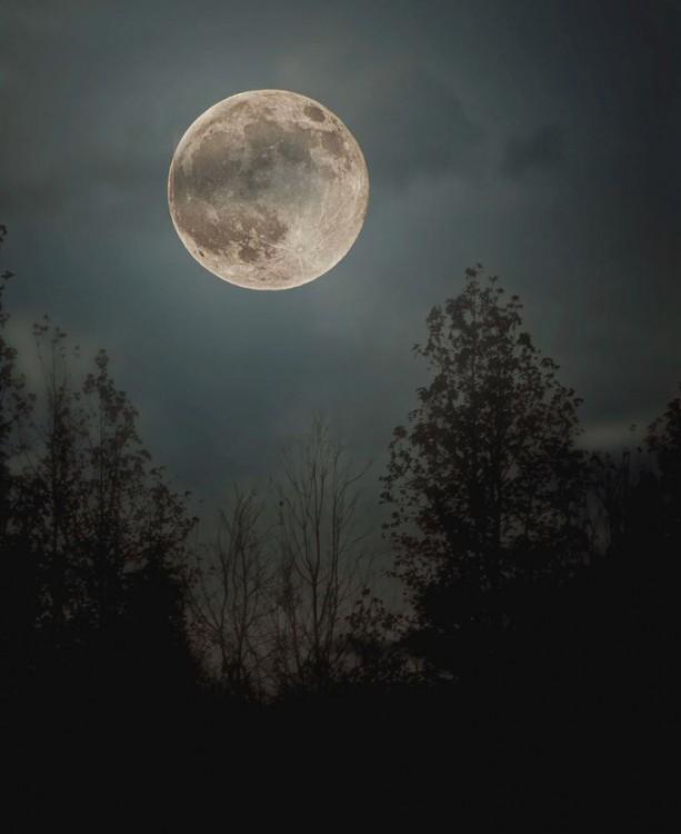Paisaje con árboles y luna