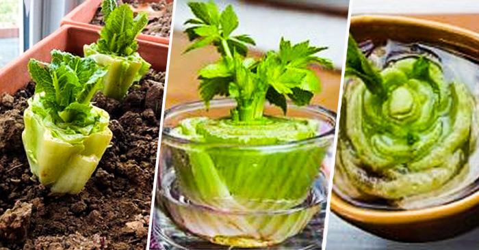 ¡NO LOS TIRES! 10 Restos de Frutas y Verduras que Pueden Volver a Crecer