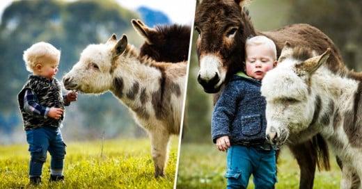 burros bebes
