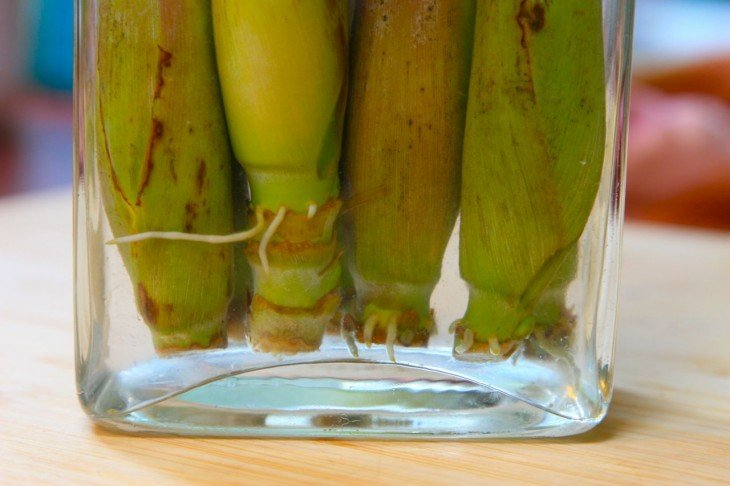 Lemongrass en un recipiente con agua