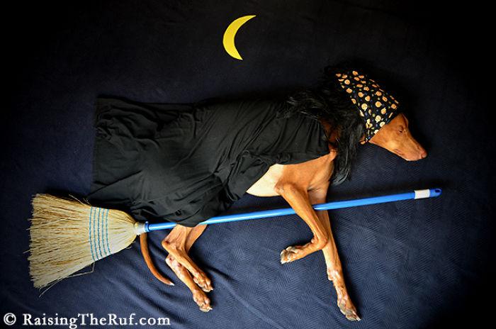 perro volando una escoba de bruja