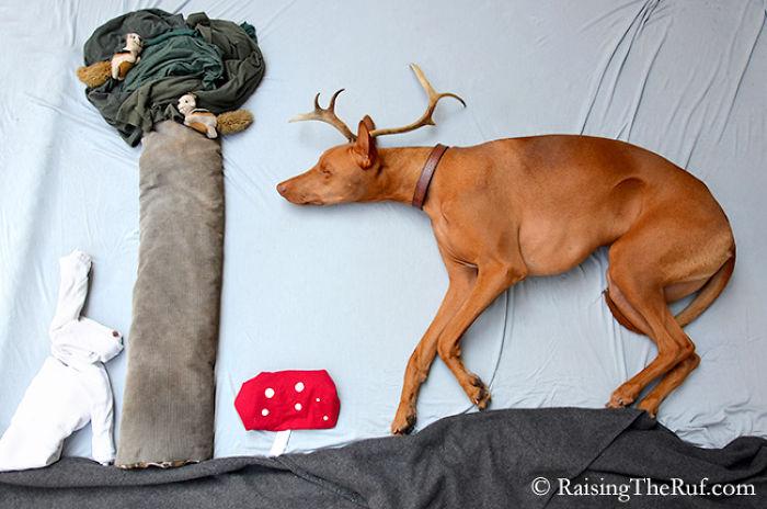perro con cuernos de reno