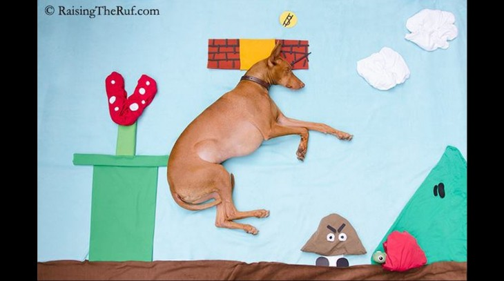 perro interpretando a mario bros