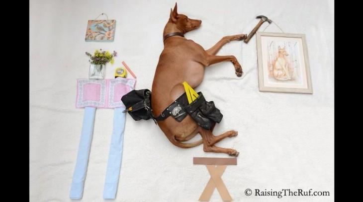 perro interpretando a un tecnico