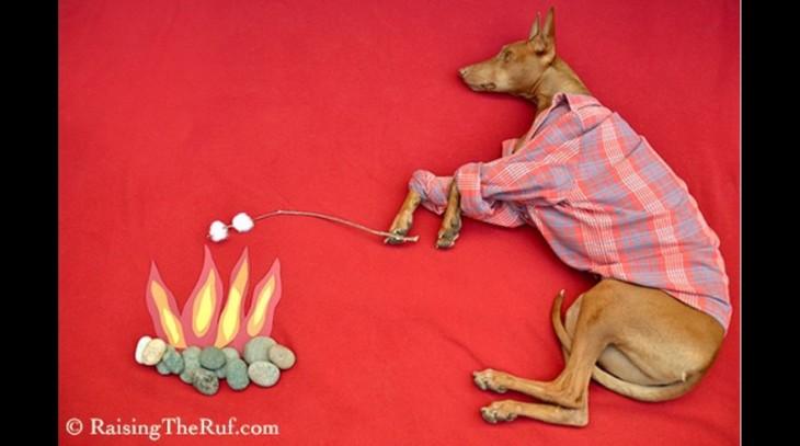 perro acampando y comiendo