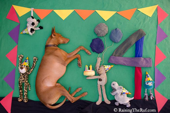 perro jugando al cumpleanos feliz