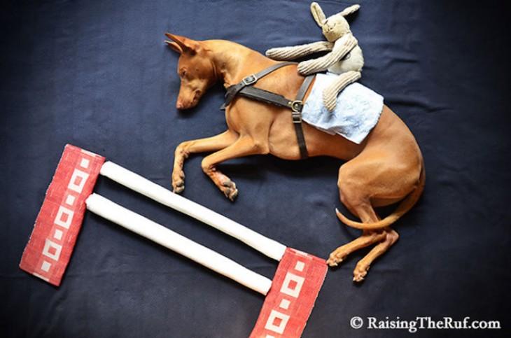 perro haciendo de caballo de carrera