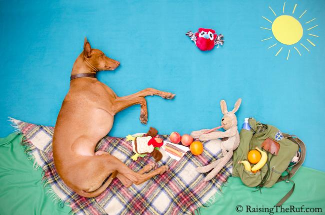 perro en picnic con amigos