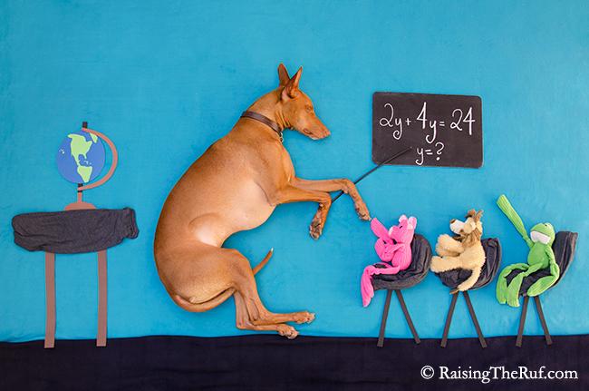 perro dando clases a peluches