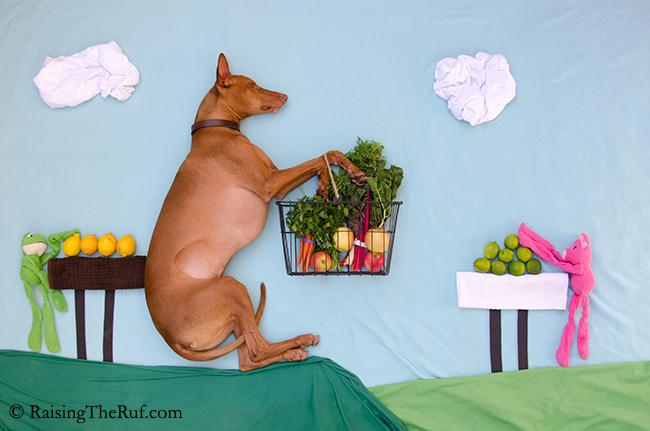 perro llevando un canasto de vegetales