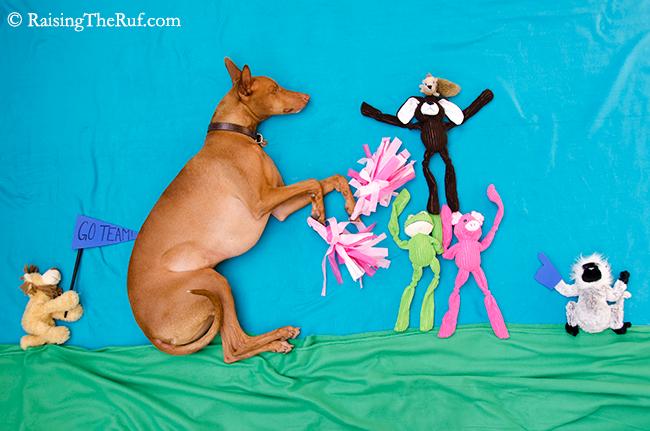 perro haciendo de cheerleader