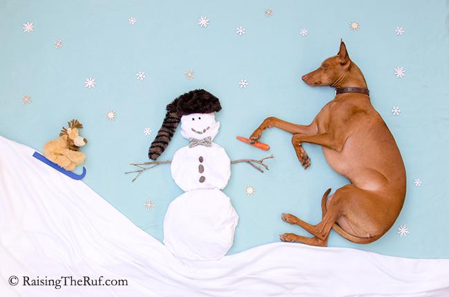 perro construyendo un muneco de nieve