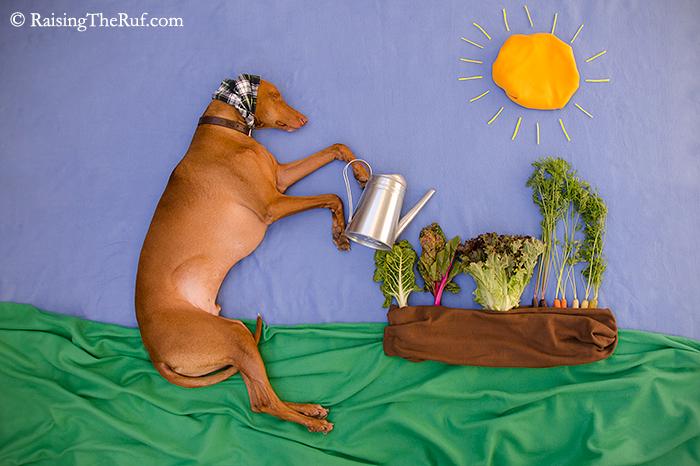 perro regando a las plantas
