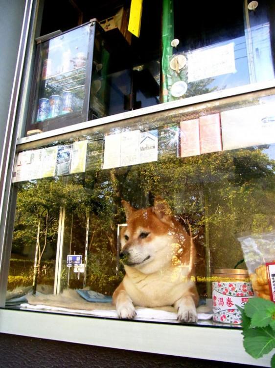 perro viendo por la ventana la gente que pasa