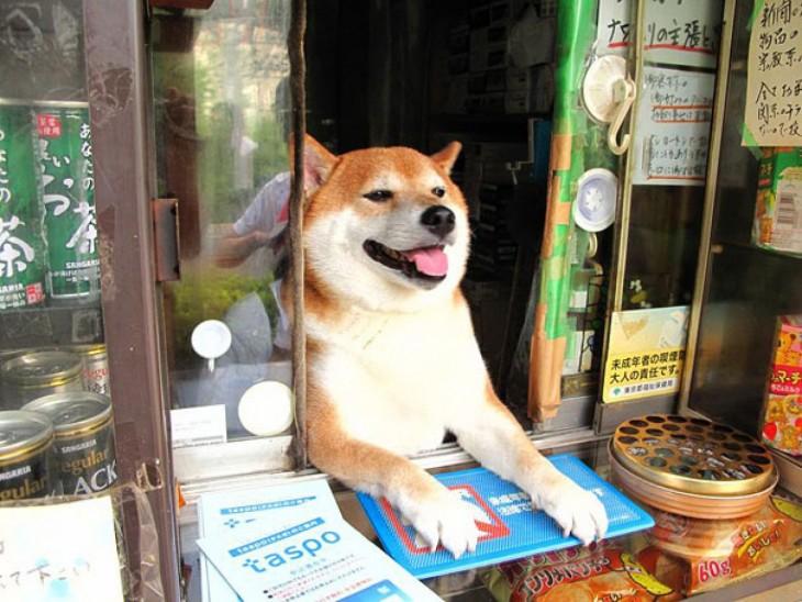perro atendiendo un kiosko