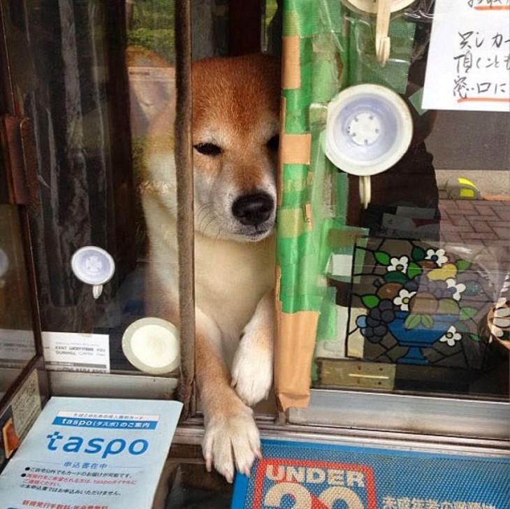 perro abriendo la ventana del kiosko