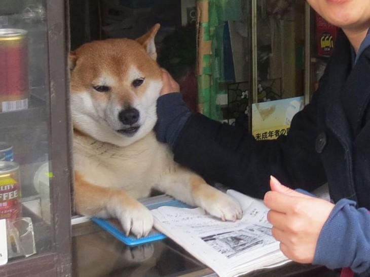 perro siendo tocado por persona