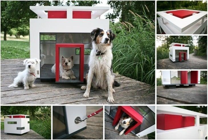 casa en forma de cubo para perro con ventanas