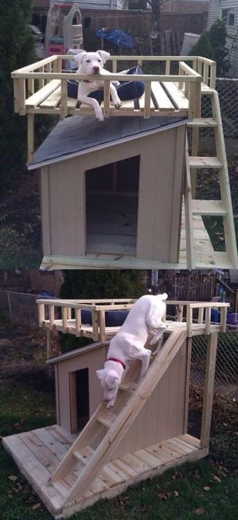 casa para perro de dos pisos con escalera