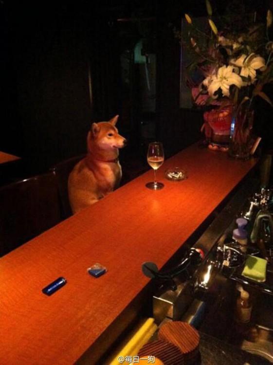perro en la barra de u n bar tomando una copa