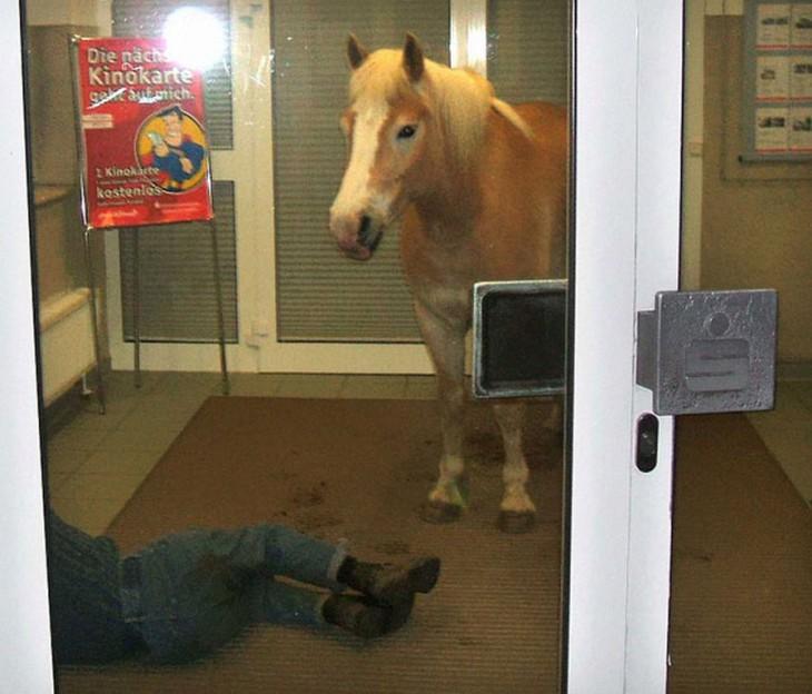 caballo en el vestibulo junto a piernas