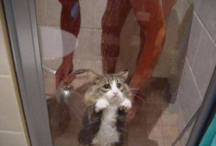gatito en la ducha