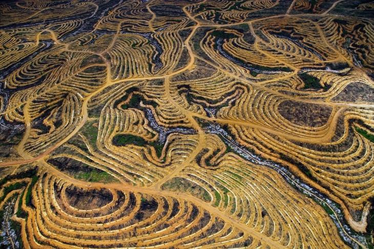La jungla de Indonesia, transformada en una plantación de palmas