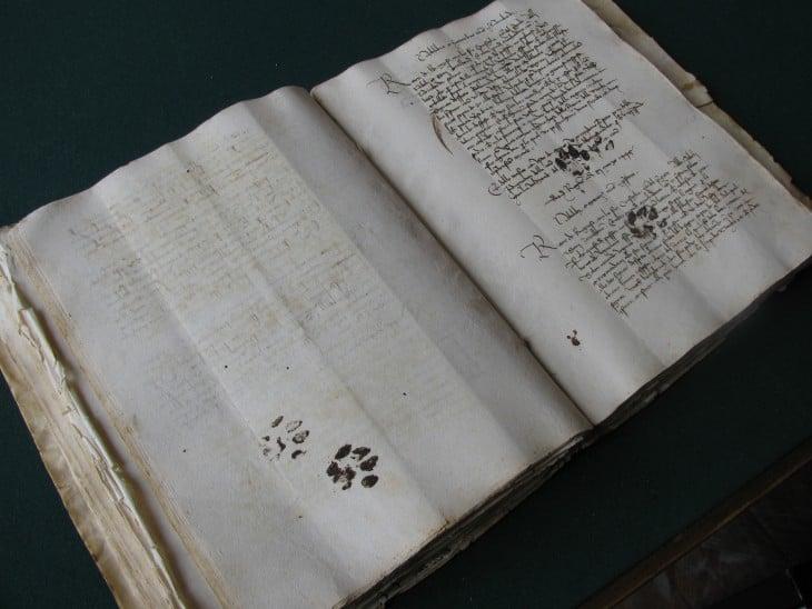 libro antiguo con pizadas de gato
