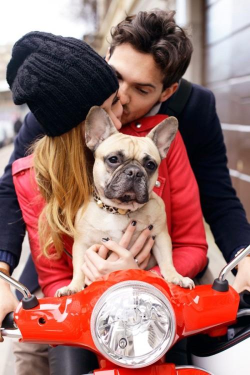 bulldog en una vespa con una pareja