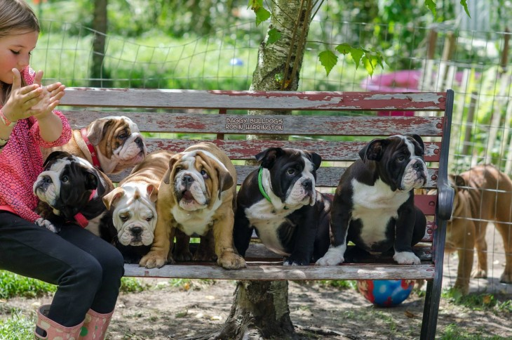 niña con bulldogs