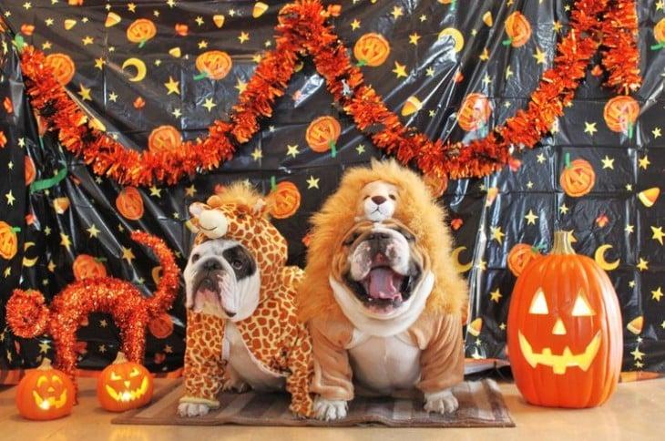 disfrazados de halloween
