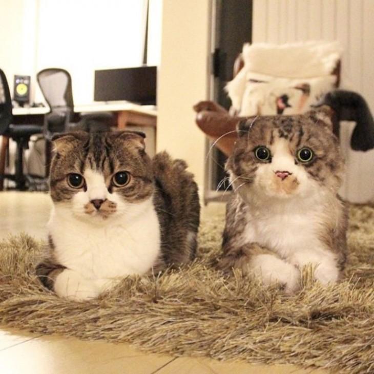 gato blanco y gris con su peluche identico