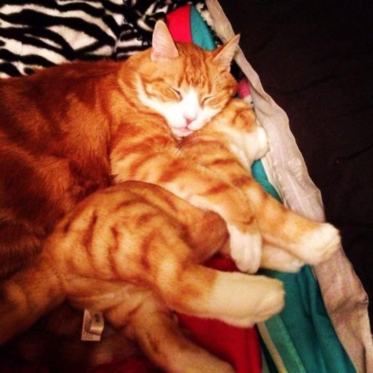 peluche de gato pardo con el gato original