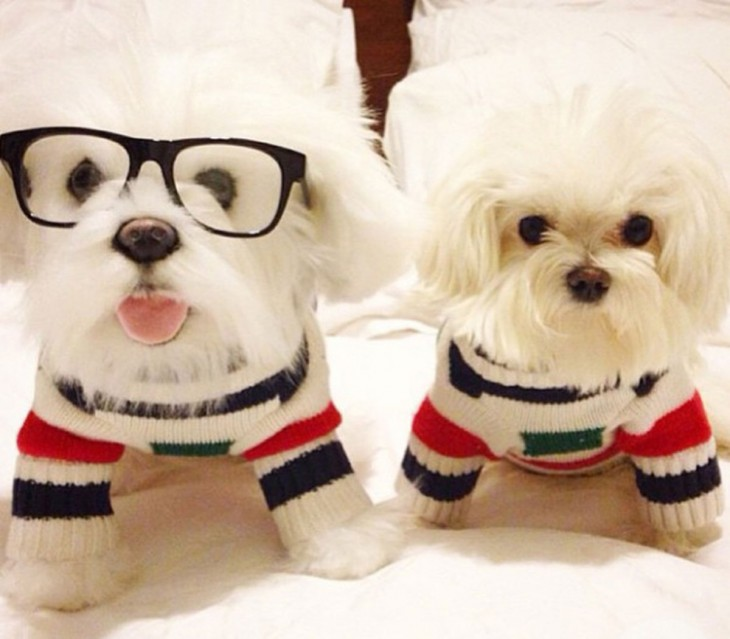 perro blanco con lentes junto a su peluche