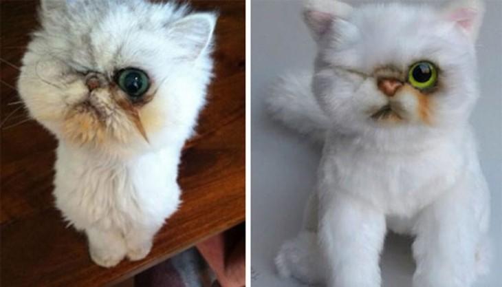 gato blanco y su peluche