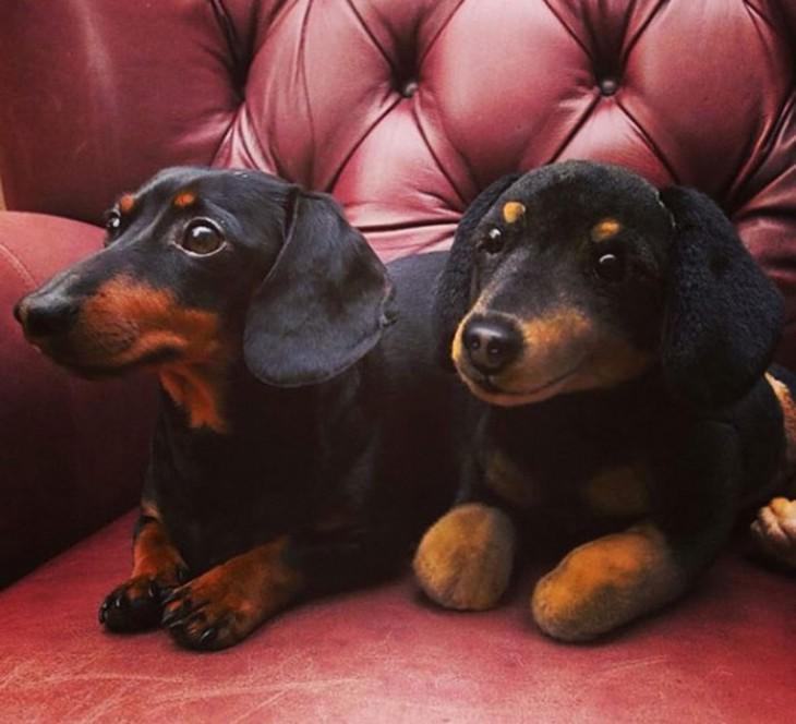 perro salchicha y peluche salchicha