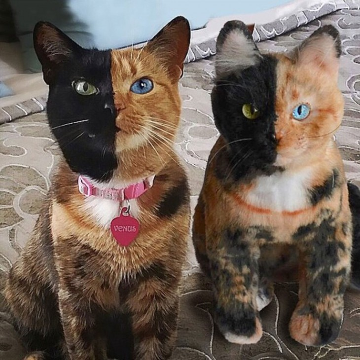 gato begro y pardo con su peluche identico
