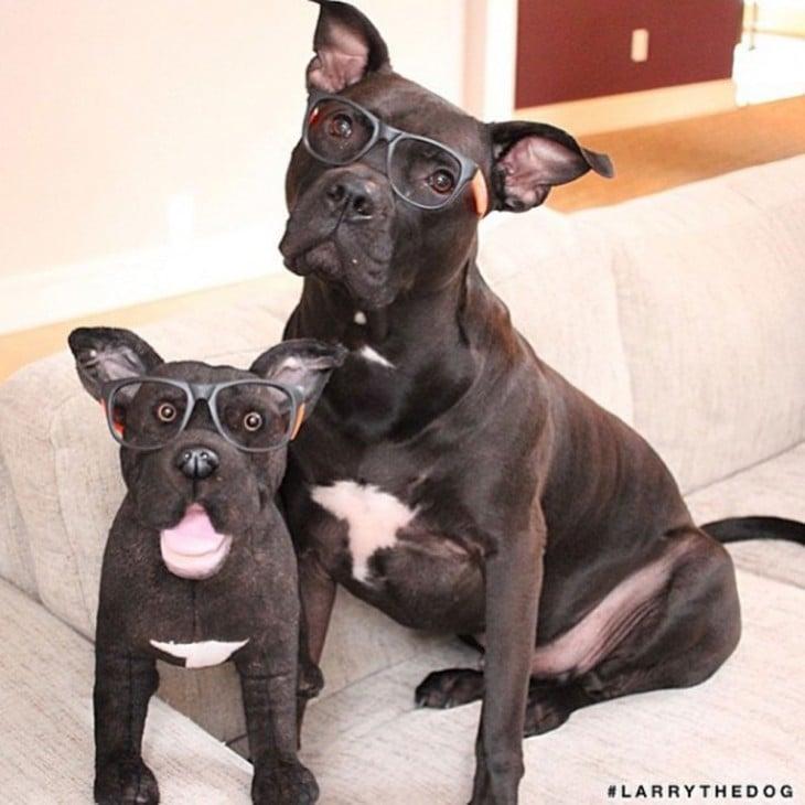 perro dogo con su mini dogo