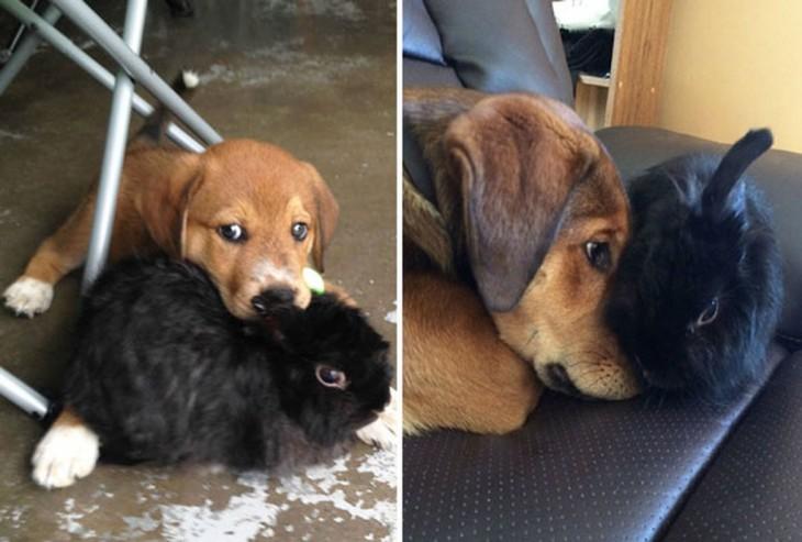 perro golden retriever y uno negro durmiendo