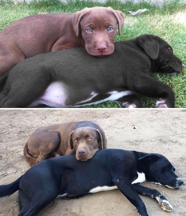 dos perros antes y depsues en el jardin