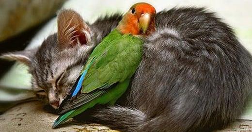 relaciones entre animales dificiles de creer