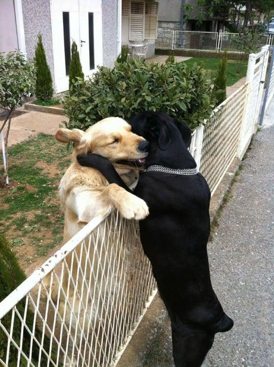 perros abrazandose en una reja