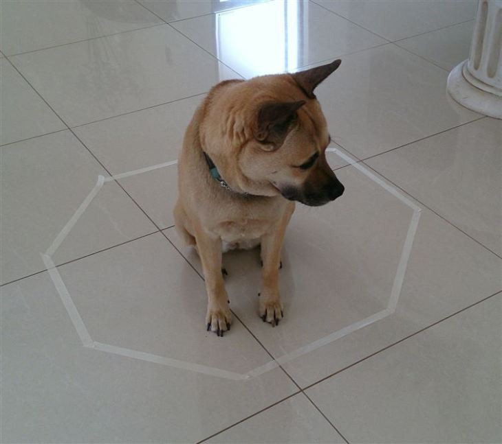 perro en el método del hexagono para gatos