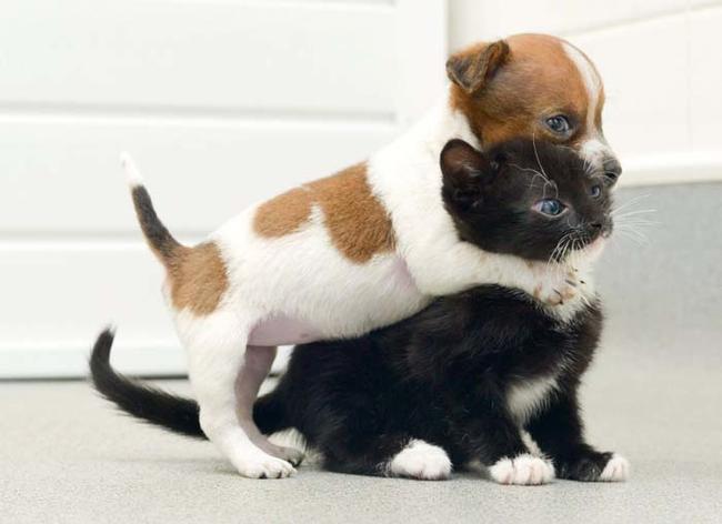 perro abraza a gato fuertemente