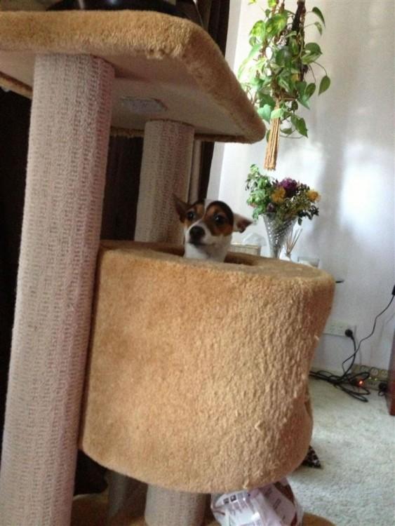 perro atorado en un perchero